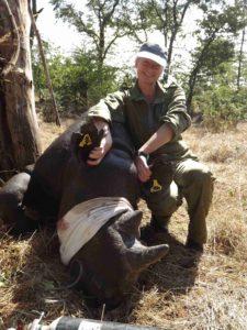 Ear notching a rhino.