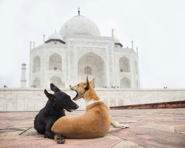 Alex now photographs animals all over the world.