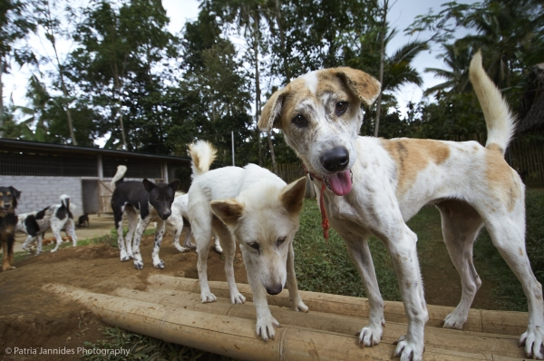 Dogs at the BARC refuge.