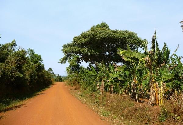 The road to KAASO.